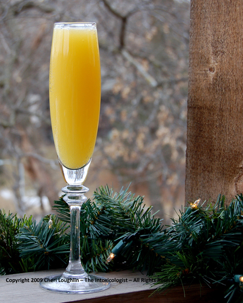 PJ Mimosa copyright Cheri Loughlin